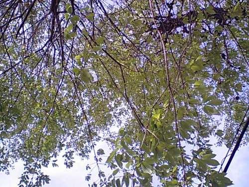 木々の新芽0422102.JPG
