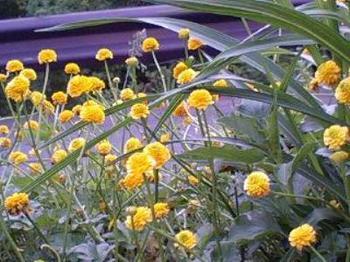 黄色い花a.jpg